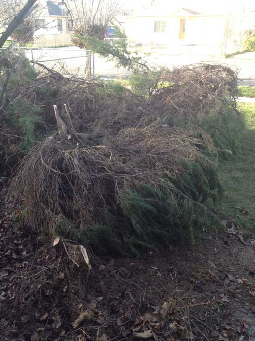 Goodbye bushes!
