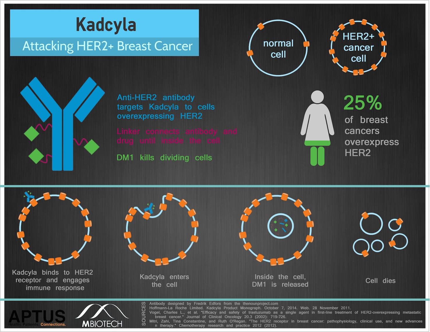 How TDM1/Kadcyla works
