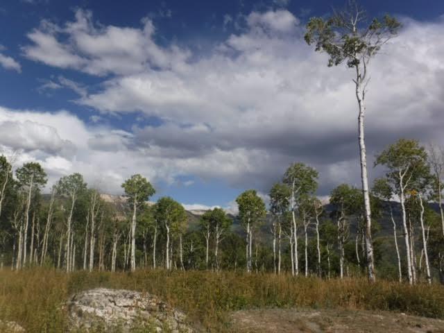 pretty-trees